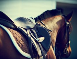 Horse harness: essential accessories