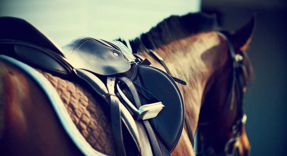 Horse harness essential accessories